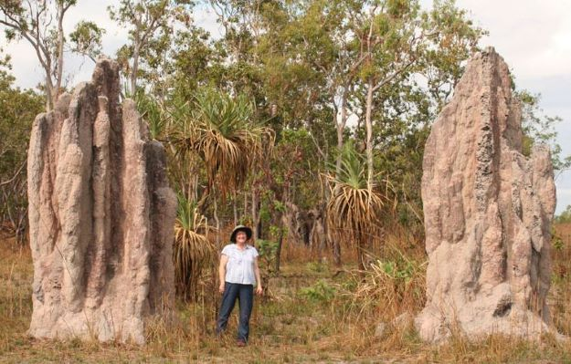 Animal Homes Structures - Termite Cathedral Mounds - animal cruelty facts, animal rights, animal sentience