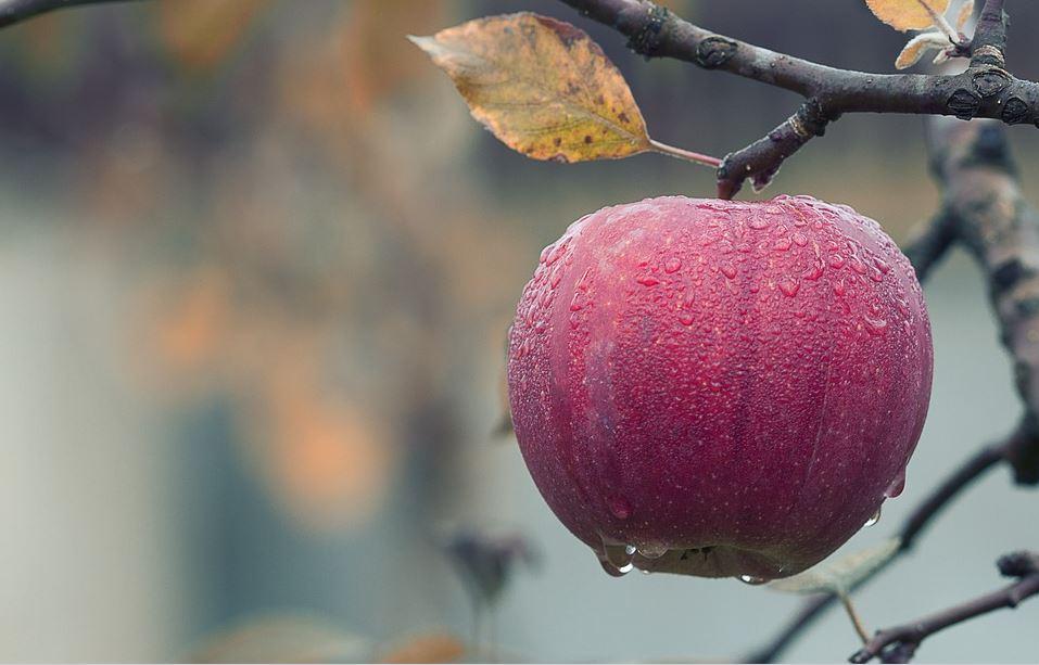 Apples: Best Plant-Based Vegan Food For Sex Drive (For Men & Women)