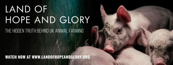 Vegan Animal Rights Documentaries - Land of Hope and Glory (2017)