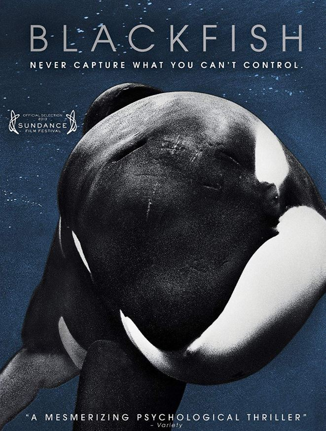 Vegan Animal Rights Documentaries - Blackfish (2013)