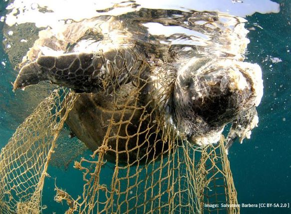 Effects of Overfishing - Bycatch