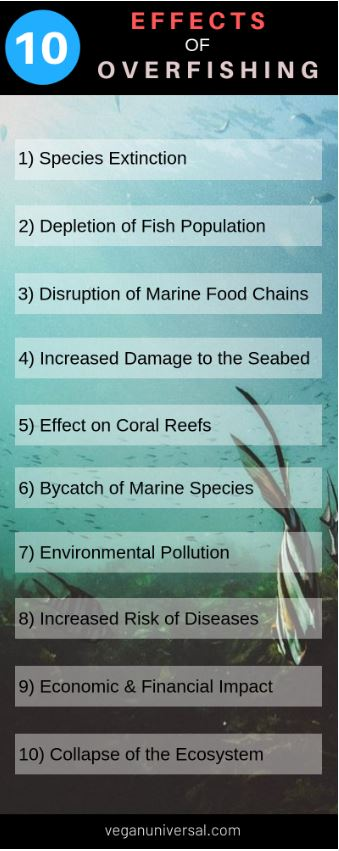 Pinterest PIn: 10 Effects of Overfishing with Facts & Statistics