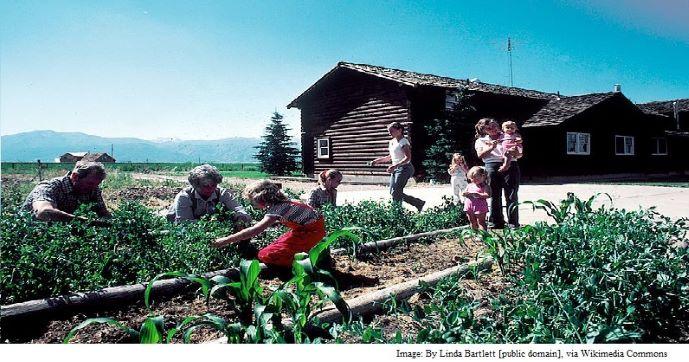 Beginner Vegetable & Greens Garden Guide (Veganic & No-Till)