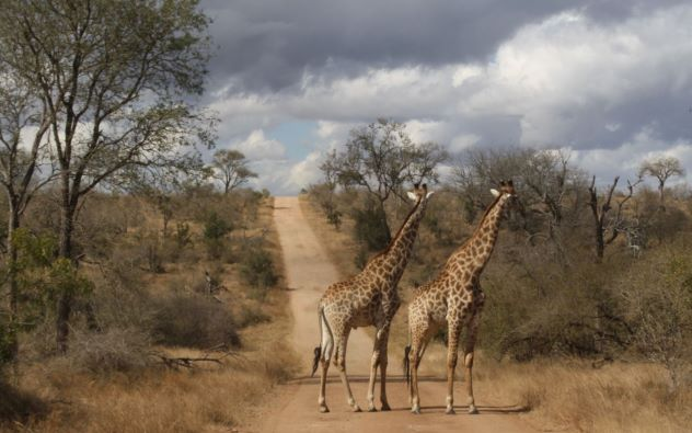 Kruger National Park: Best & Most Visited National Parks in the World / beautiful famous popular largest national parks