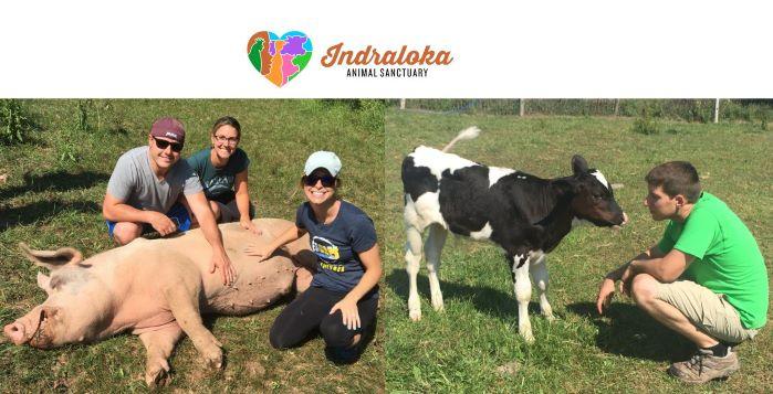 Indraloka Animal Sanctuary – Mehoopany, Pennsylvania