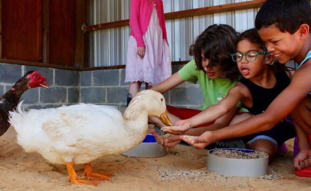 Piedmont Farm Animal Refuge (The Refuge) – Pittsboro, North Carolina