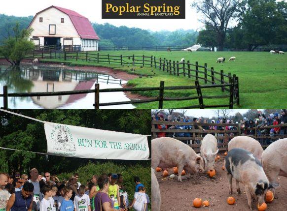 Poplar Spring Animal Sanctuary – Maryland