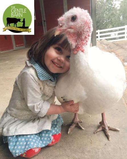 The Gentle Barn - California / Tennessee / Missouri